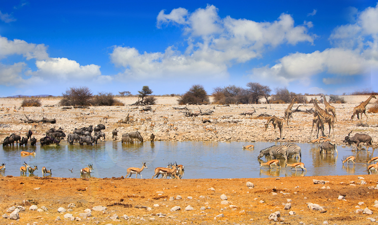 Checkout Animals drinking at a waterhole in Etosha on a safari in africa