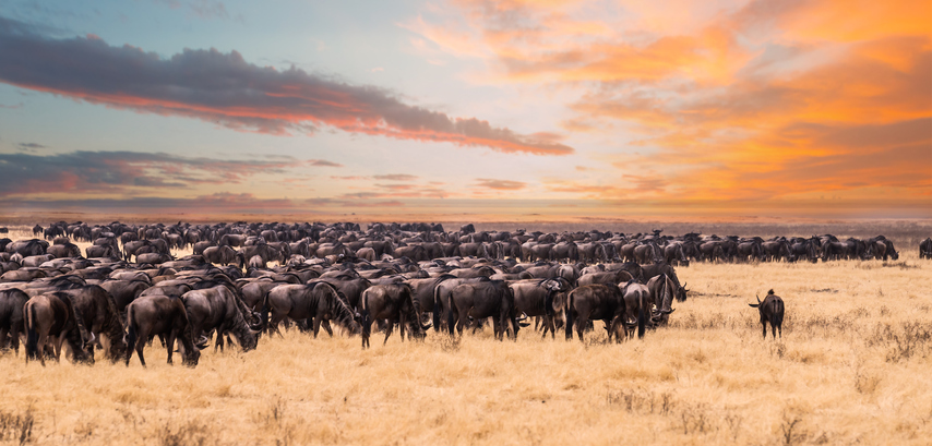 Serengeti National Park is one of the best destinations for a safari in africa