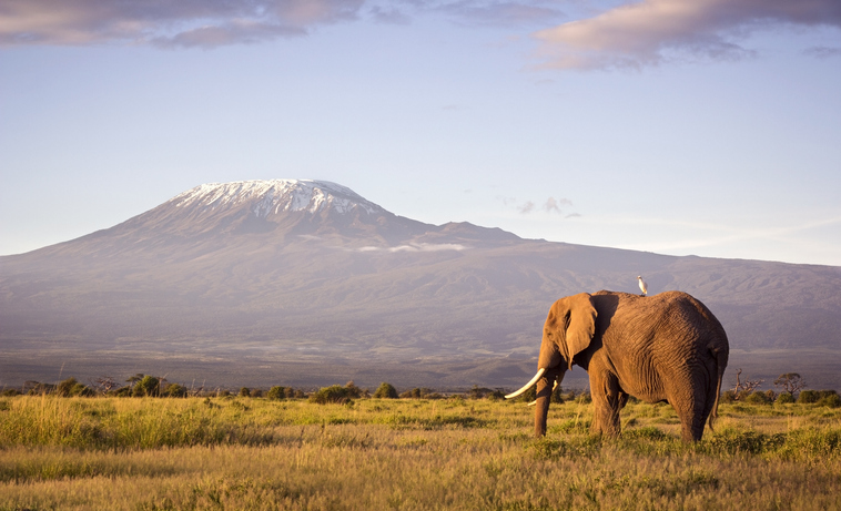 Kilimanjaro in the background of the Serengeti is one of the seven summits