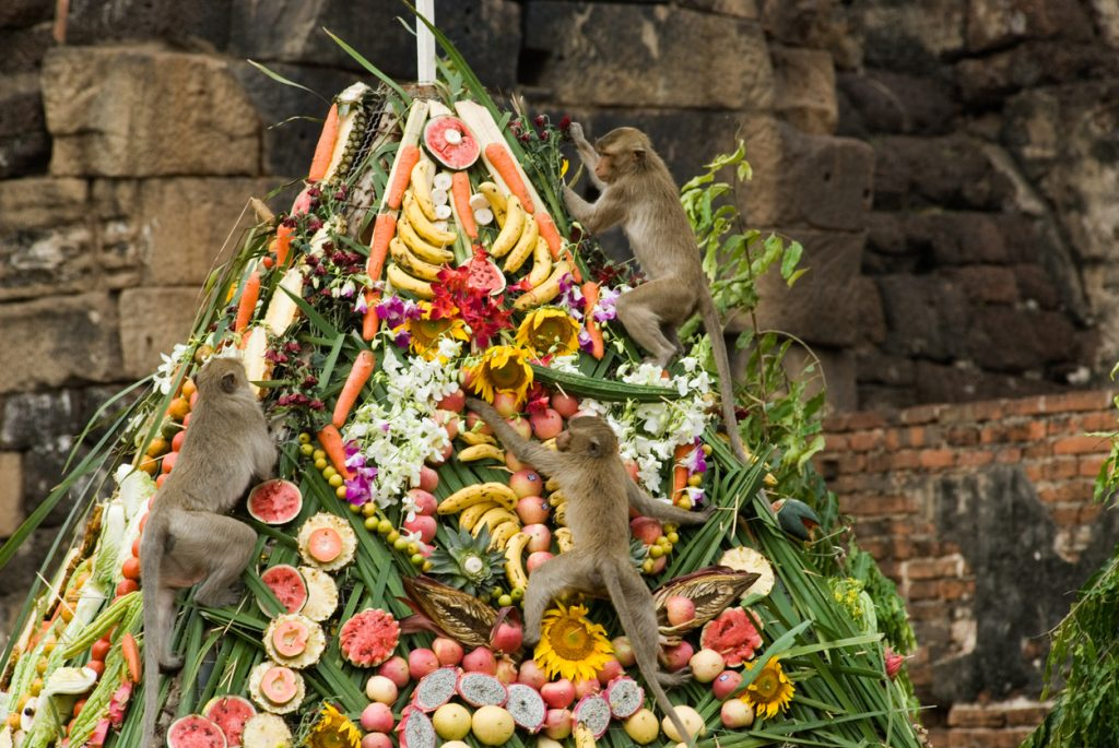 Feast for local monkeys in Thailand is among the world's unusual traditions