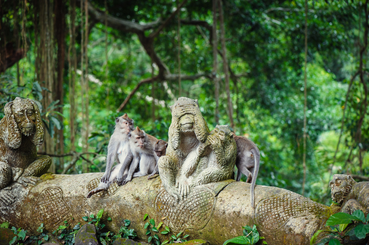 Long-tailed macaques (Macaca fascicularis) in Sacred Monkey Forest in Ubud, one of the best places to visit in bali