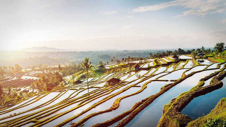 The beautiful and dramatic rice fields of Jatiluwih in southeast Bali is among the places to visit in bali