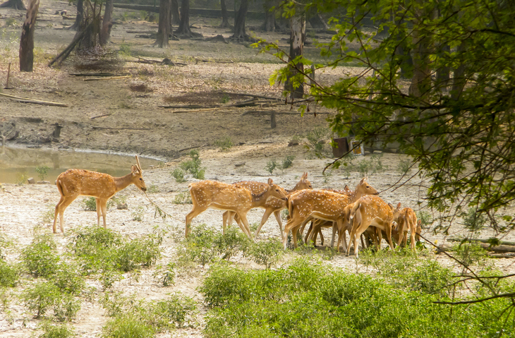 A herd of fallow deer in Bhadra Wildlife Sanctuary, one of the best places to visit in Chikmagalur