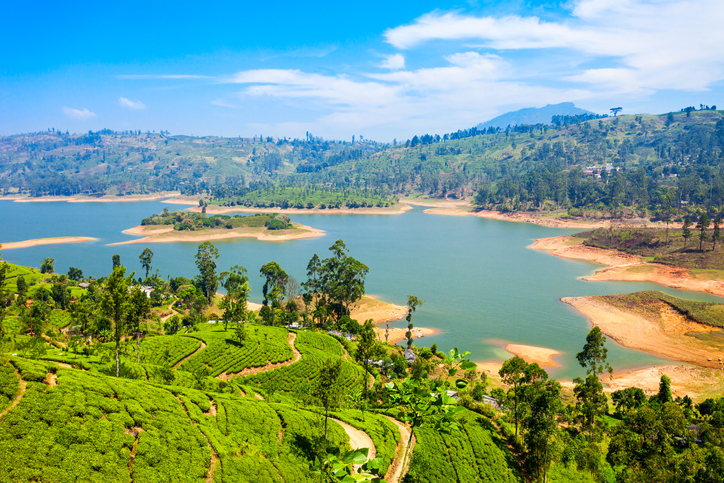 Tea plantation and Maskeliya Dam Lake or Maussakelle reservoir near Nuwara Eliya in Sri Lanka. Nuwara Eliya is the most important place for tea production in Sri Lanka.