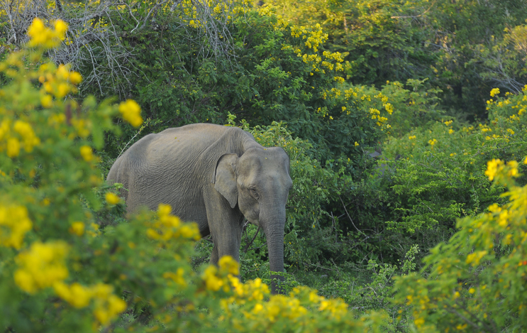 Yala National park is among the must-visit places to visit in sri lanka