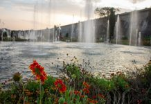 Beautiful flowers and water fountains in Brindavan Gardens during sunset with KRS dam in background, Mysore, Karnataka, India.