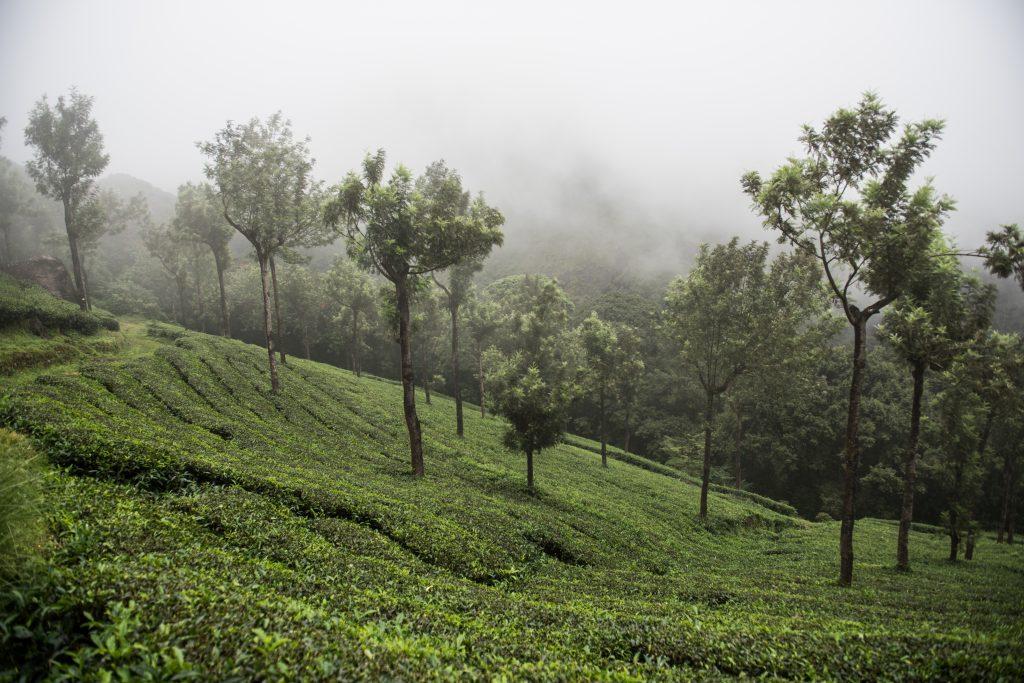 Mathikettan Shola National Park, Kerala