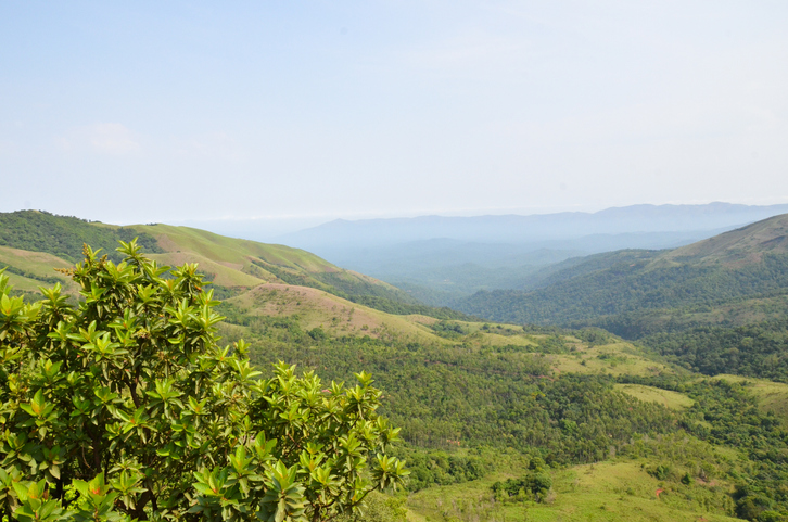 Mullayanagiri is the most popular place for trekking in Chikmagalur