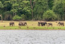 Elephants on the banks of Kabini river, Nagarhole, national parks in Karnataka