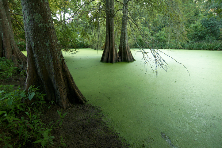 St. Francisville, Louisiana, USA - 2017: A swamp at the Myrtles Plantation, a historic home and former antebellum plantation, built in 1796 by General David Bradford.
