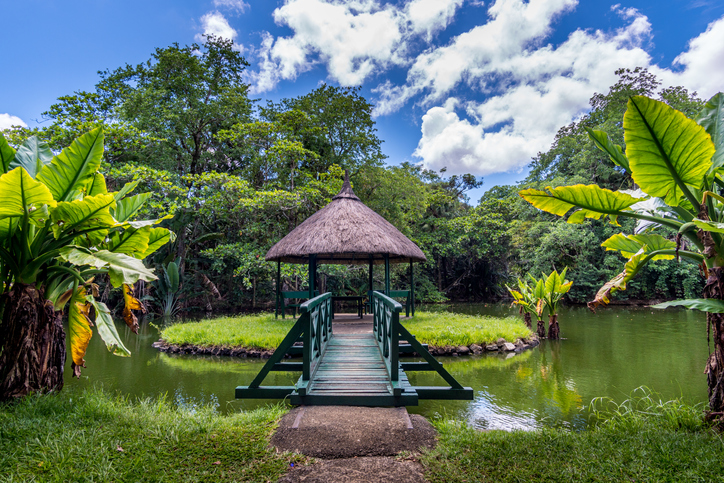 Places to visit in Mauritius- Pamplemousses Botanical Garden